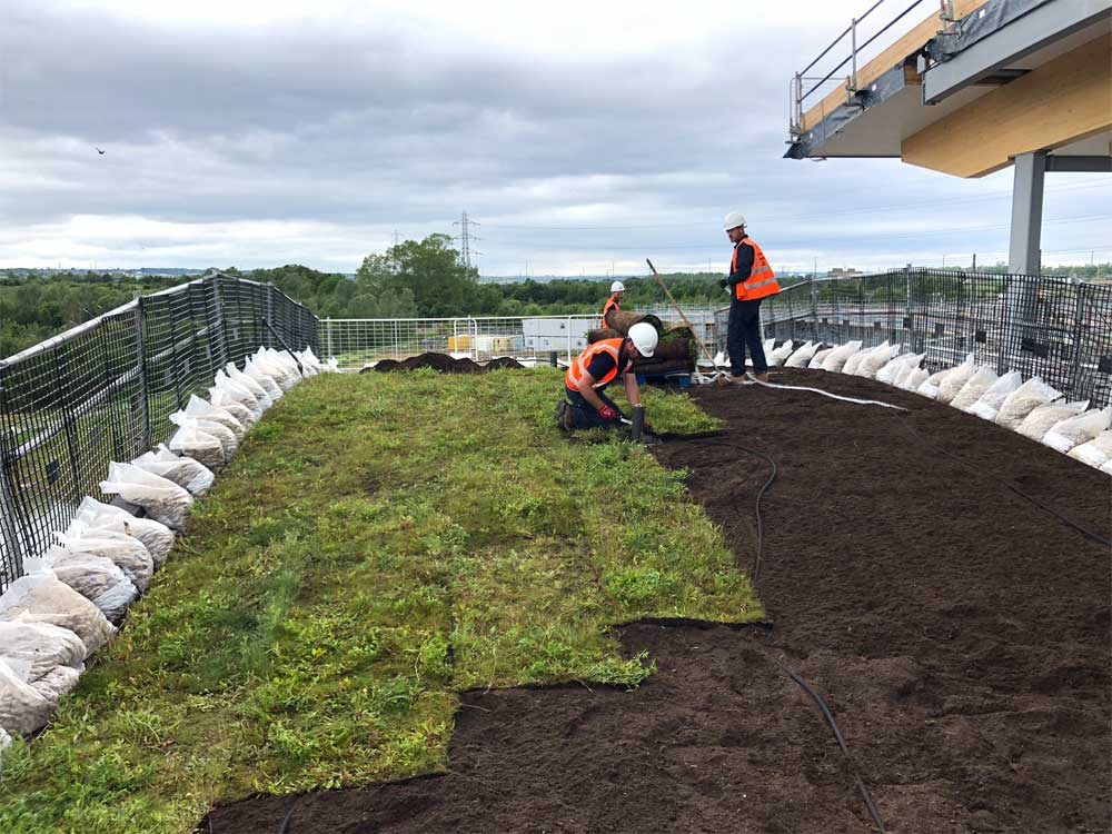 Wildflower mix installation of the Skelton Lake Services green roof project