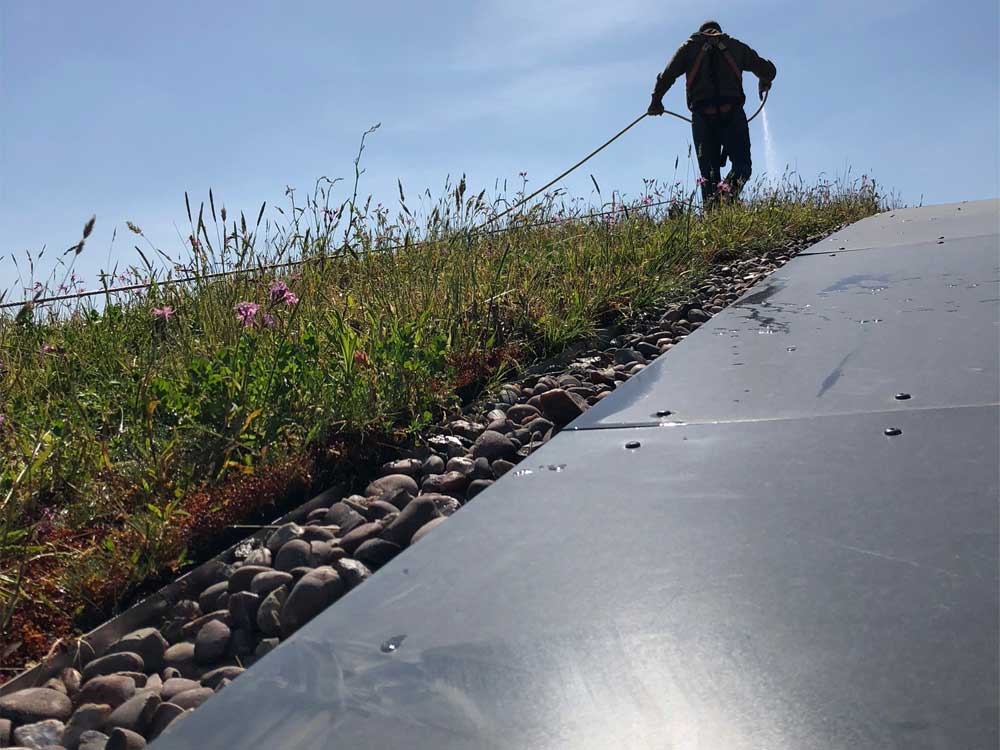 Extensive green roof watering