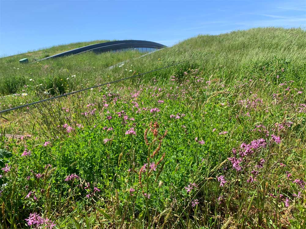 Wildflower extensive green roof by Geogreen